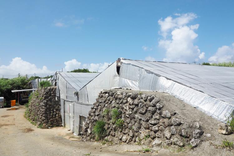 サンゴの石垣蔵
